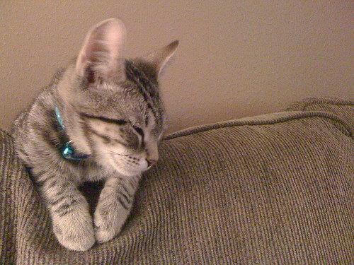 Graham, the Gargoyle Kitten