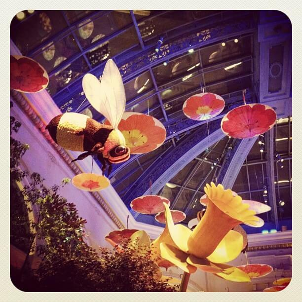 Bellagio Gardens Las Vegas Bee & Daffodil